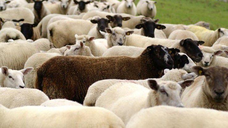 Für Kandidaten sind die schwarzen Schafe unter den Personalberatern nicht auf Anhieb zu erkennen.