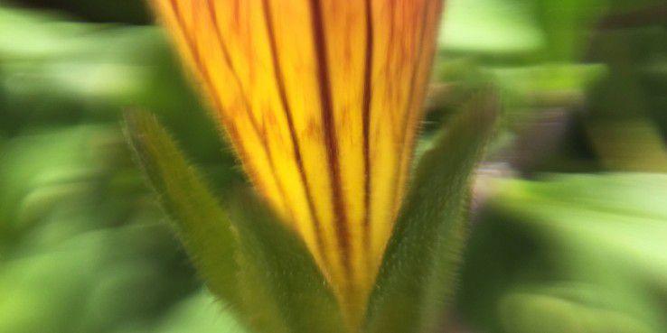 ... wie etwa von dieser Blüte.