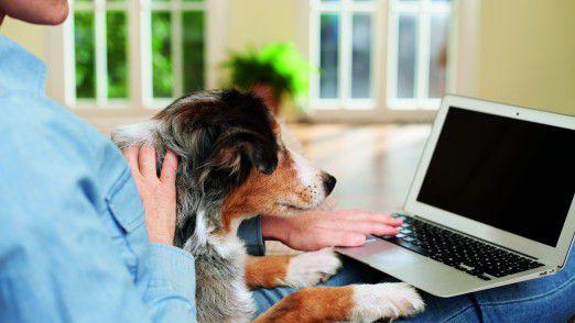 Von wegen online: Die meißten Deutschen kaufen Futter für Haustiere traditionell im Laden.