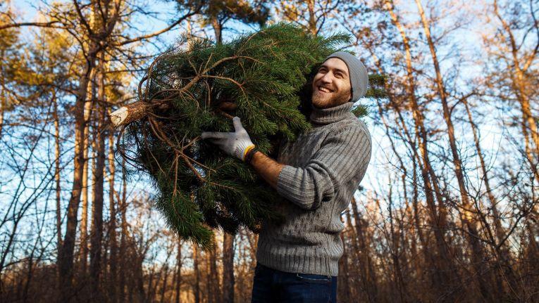 Wer bei Systeam im November genug Brother-Umsatz macht, dem wird ein frisch geschlagener Christbaum frei Haus geliefert.