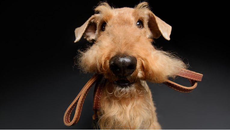 Hundehalter sollen als Zielgruppe mit SEA angesprochen werden. Und welches Produkt soll beworben werden? Dieses Bild sagt alles.