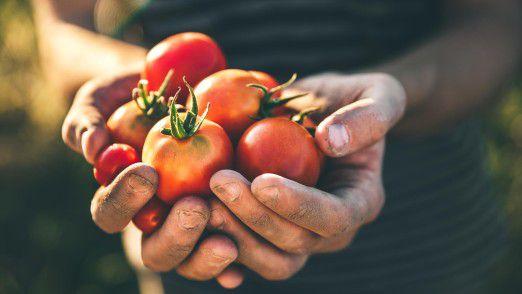 Dass Tomaten etwas mit Produktivität im Büro zu tun haben sollen, geht auf den Namen eines Erfinders zurück.