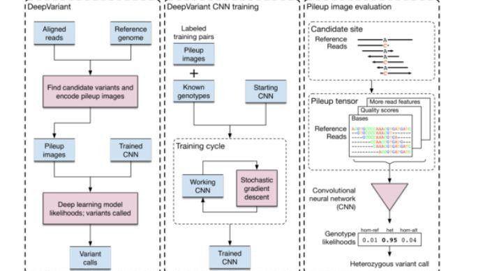Die KI-Software Google Deepvariant ist für die Genomerforschung konzipiert.