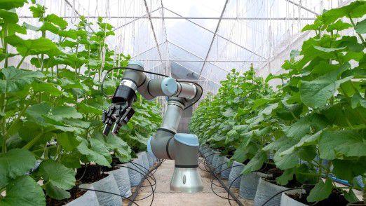 Controlled-Environment-Agriculture, also kontrollierten Indoor-Farming, bringt Früchte, Pflanzen oder Gemüse näher zu den Verbrauchern in den Städten.