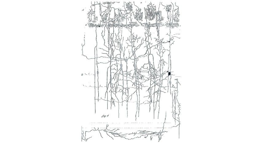 Neuronen: Darstellung von Neuronen aus histologischen Präparaten (van Gehuchten 1892)