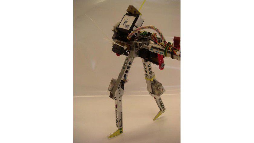RunBot ist schnell unterwegs. Foto: Bernstein Center for Computational Neuroscience (BCCN) Goettingen