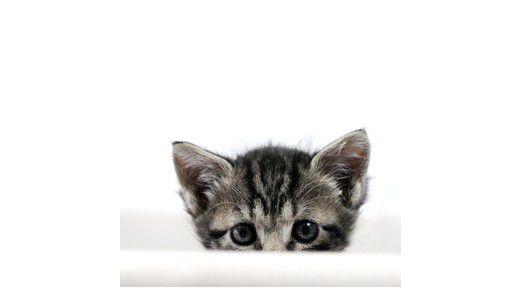 Auch das gibt es: Die Katze setzt sich in den Wäschekorb - und die Daten sind futsch.