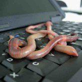 Einige Würmer wie etwa Conficker sterben 2013 aus, so Bitdefender.