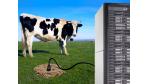 Green IT: Kuhfladen versorgen Data Center mit Energie - Foto: Hewlett-Packard