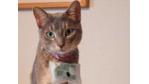 """Miau, bin am Freßnapf"": Sony lässt Katzen twittern - Foto: Sony"
