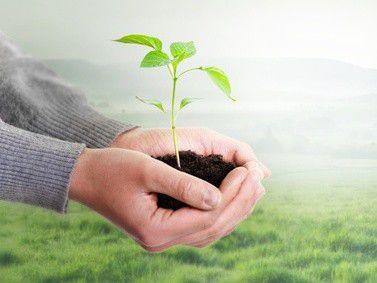 Damit Pflanzen - und auch Firmen - wachsen können, ist eine passende Umgebung nötig.