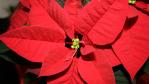 O du fröhliche…: Die CW-Redaktion im Weihnachtsfieber