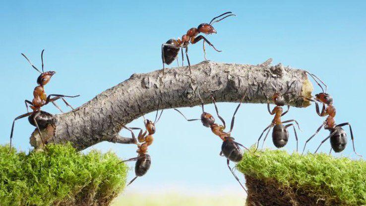 Nicht nur bei Ameisen, auch in menschlichen Teams ist eine effektive Zusammenarbeit oft der Schlüssel zum Erfolg.