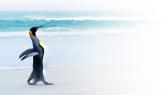 Tails: Linux und Open-Source-Rückblick für KW 26 - Foto: Kwest/Fotolia.com