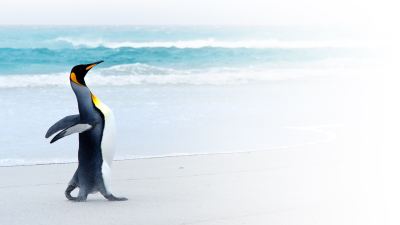 Shooting-Star bei Betriebssystemen : Android - der Pinguin wird mobil - Foto: Kwest/Fotolia.com