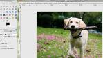 Photoshop-Alternativen: Kostenlose Grafik-Tools für Profis - Foto: Diego Wyllie