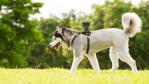 Gadget des Tages: Sony AKA-DM1 - Videos aus der Hundeperspektive - Foto: Sony