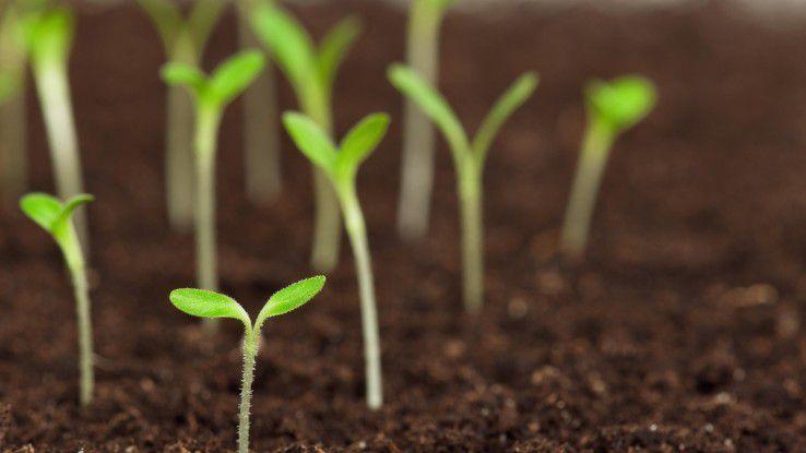 Was einmal eine große Pflanze werden soll... Personalarbeit besteht u.a.aus einer gezielten Nachfolgeplanung.