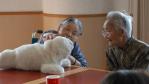 Japan stellt KI auf den Prüfstand: Ermordung eines Rentners durch Pflegeroboter knapp verhindert - Foto: AIST