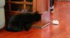 Mousr – Roboter-Maus als ultimatives Katzenspielzeug