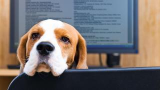 Lieber Hund statt Smartphone: Die wichtigsten Nebenleistungen für Mitarbeiter - Foto: Igor Normann-shutterstock.com