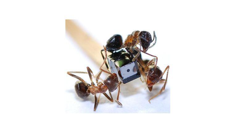 Miniaturkameras, wie man sie bisher aus der Endoskopie kennt, spielen im Projekt eine wichtige Rolle - hier ein Modell des Projektpartners AWAIBA im Größenvergleich mit Ameisen.