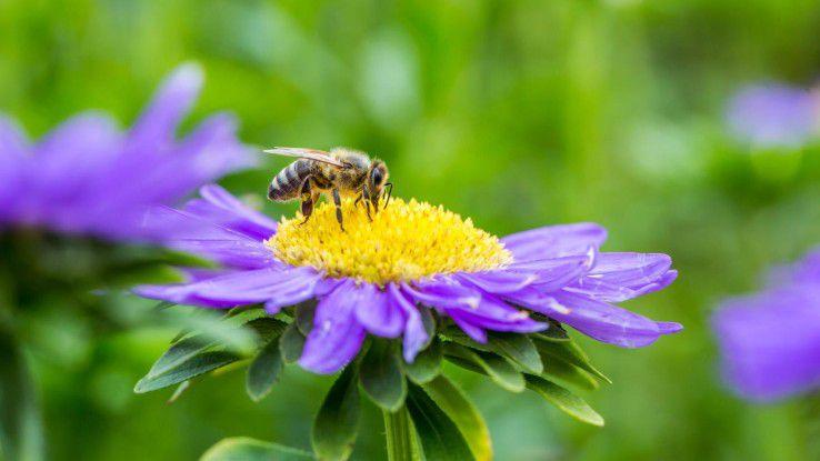 """Die """"fleißigen Bienchen"""" bilden das Rückgrat jedes Unternehmens und sollten nicht vernachlässigt werden."""
