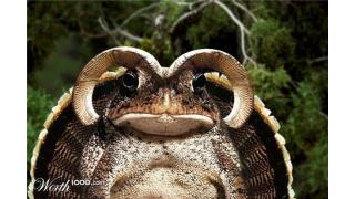 Als die Bilder lügen lernten: Die verrücktesten Photoshop-Bilder - Foto: Worth1000.com