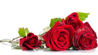 Valentinstag: Immer mehr Angebote von Blumen-Händlern im Netz - Foto: Soyka - shutterstock.com
