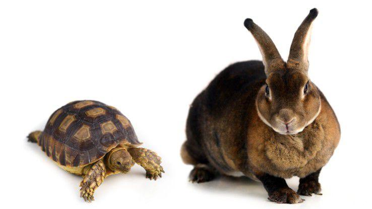 """Das Modell von der """"langsamen"""" und der""""schnellen"""" IT greift zu kurz."""