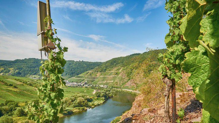 An der Mosel vernetzen Intel und Partner Weinberge per Internet of Things.