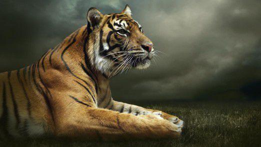 Der Chief Digital Officer arbeitet häufig in der falschen Umgebung und wird dadurch zum zahnlosen Tiger.