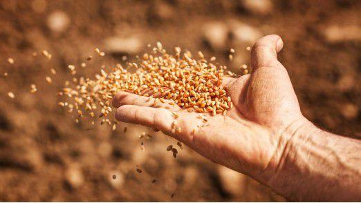 BASF könnte das Gemüsesaatgut-Geschäft von Bayer übernehmen.