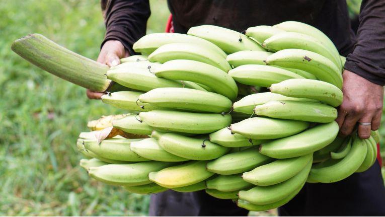 Der grüne Bananen Effekt: Genauso wenig, wie eine grüne Banane schmeckt, so wenig nützt dem Vertrieb ein Kunde, der noch nicht das richtige Stadium erreicht hat, um ihn gewinnbringend anzusprechen.