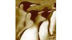 Linux-Welle in der öffentlichen Verwaltung