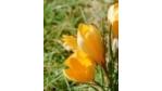 Knowledge-Management im zweiten Frühling