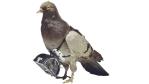 E-Mail-Marketing: Zehn Tipps für das Verfassen pfiffiger Mailings - Foto: Deutsches Museum