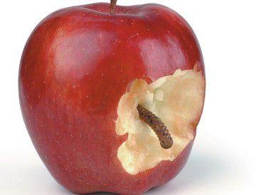 Der Kult um die trendigen Apple-Produkte lockt auch zwielichtige Nutznießer.