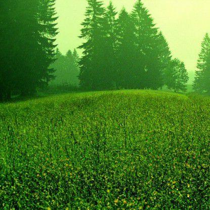 """Laut Accenture ist Grüne IT ideal, um """"ökologische und imagewirksame Quick-Wins"""" mit einer hohen Investitionsrendite zu realisieren."""