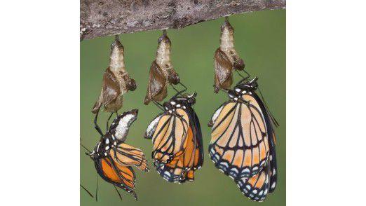 Wandlungsfähigkeit ist stärker gefragt als bisher. Schmetterlinge wechseln ihre Gestalt wie selbstverständlich. Können CIOs das auch?