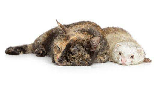 Mittlerweile gehört das Implantieren von subkutanen Chips bei Haustieren zum Alltag.